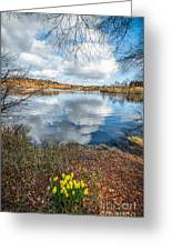 Daffodil Lake Greeting Card by Adrian Evans