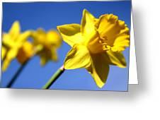 Daffodil Line Greeting Card