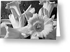 Daffodil Monochrome Study Greeting Card