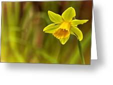 Daffodil - No. 1 Greeting Card