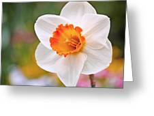 Daffodil  Greeting Card by Rona Black