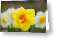 Daffodil Standout Greeting Card