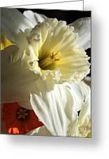 Daffodil Still Life Greeting Card