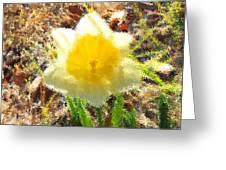 Daffodil Under Water Greeting Card