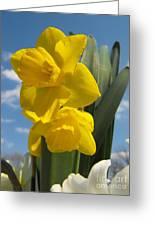 Daffodills In Spring Greeting Card