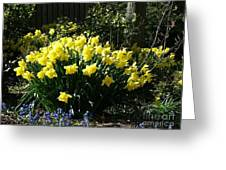Daffodils And Bluebells Greeting Card