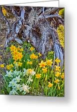 Daffodils And Sculpture Greeting Card