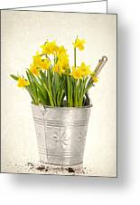 Daffodils Greeting Card by Amanda Elwell