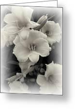 Daffodils Emerge Greeting Card