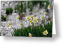 Daffodils On The Shore Greeting Card
