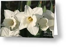 Dafodil171 Greeting Card