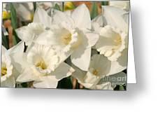 Dafodils162 Greeting Card