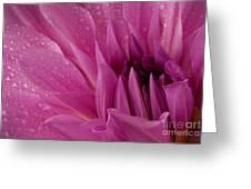 Dahalia In The Rain - 651 Greeting Card
