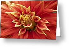 Dahlia - 2 Greeting Card