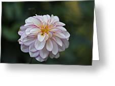 Dahlia # 5 Greeting Card