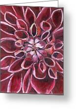 Dahlia - Closeup 2 Greeting Card