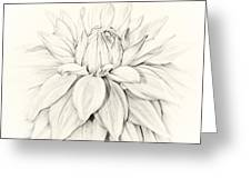 Dahlia 3 Greeting Card