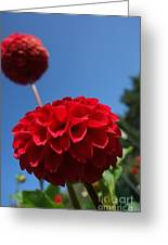 Dahlia #4 Greeting Card