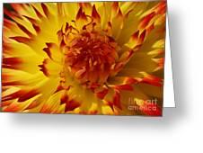Dahlia 8 Greeting Card