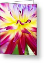 Dahlia Abstract Greeting Card by Tim Gainey