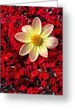 Dahlia And Kalanchoe Greeting Card