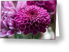 Dahlia And Mums Greeting Card