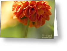 Dahlia Blossom Greeting Card