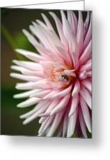 Dahlia Bug Greeting Card