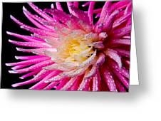 Dahlia Burst Greeting Card