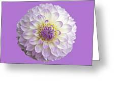 Dahlia Greeting Card