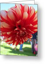 Dahlia Dahling Greeting Card