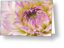Dahlia Delight Square  Greeting Card