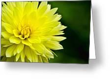 Dahlia Dream Greeting Card