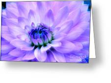 Dahlia Dream Greeting Card