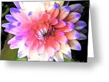 Dahlia Effect Greeting Card