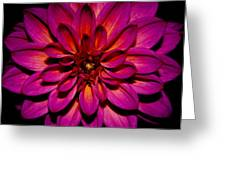 Dahlia Explosion Greeting Card