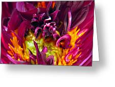 Dahlia Fairies Delight Greeting Card