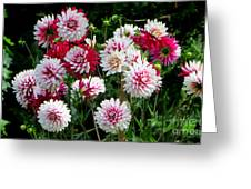 Dahlia Love Greeting Card