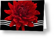 Dahlia Flower And Wavy Lines Triptych Canvas 2 - Red Greeting Card by Natalie Kinnear