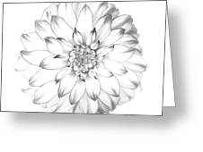 Dahlia Flower As Drawing In Black And White. Greeting Card