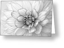 Dahlia Flower Black And White Greeting Card