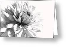Dahlia Flower In Monochrome Greeting Card