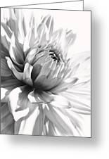 Dahlia Flower In Monochrome Greeting Card