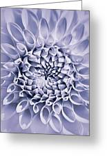 Dahlia Flower Star Burst Purple Greeting Card