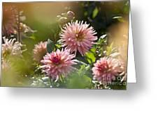 Dahlia Garden Greeting Card