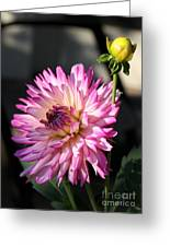 Dahlia Generations Greeting Card
