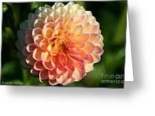 Dahlia Hue Greeting Card