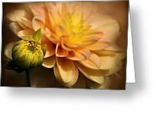 Dahlia Hypnosis Greeting Card