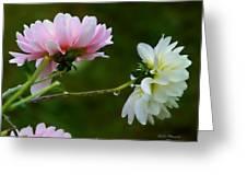 Dahlia Incognito Greeting Card