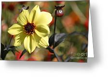 Dahlia Knockout Greeting Card
